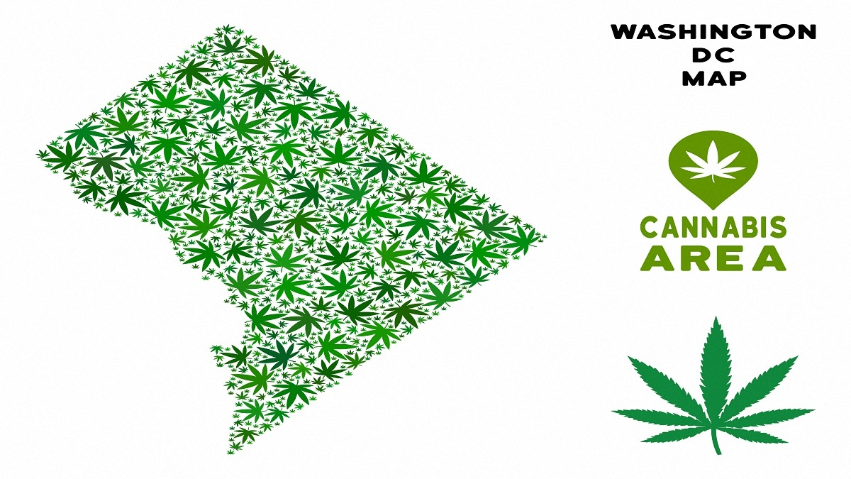 Ganja Washington DC map collage of marijuana leaves. Narcotic dependence template. Vector Washington DC map is composed of green ganja leaves. Abstract territory scheme in green color tones