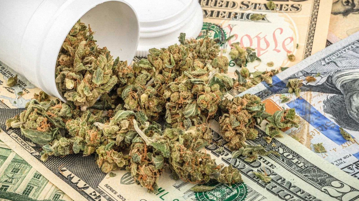 Cannabis buds spilled out from a white plastic container onto hundred dollar bills