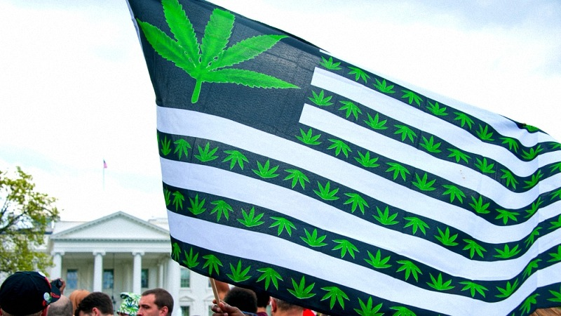cannabis flag by protestes in washington dc