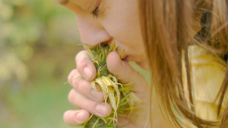 a women smelling hemp flower in the middle of hemp farm