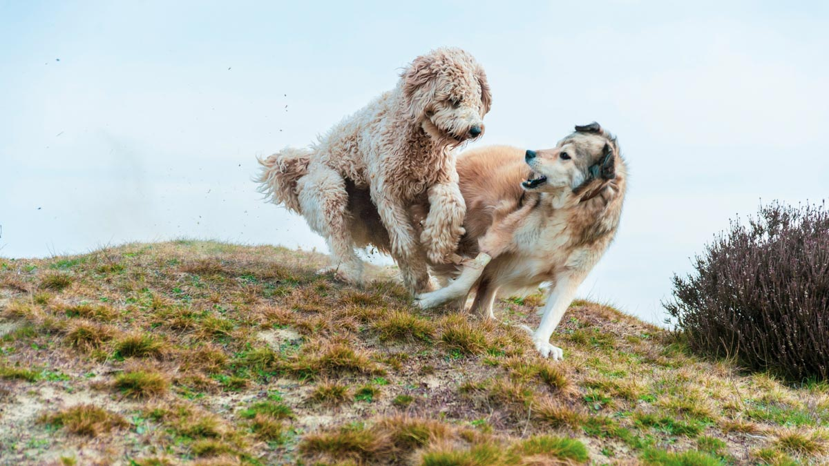 two hyper dogs playing on a field