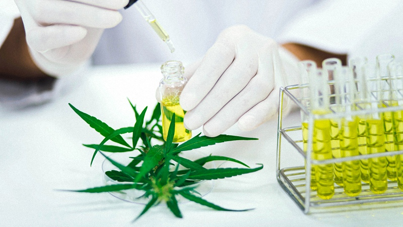 Laboratory Testing for CBD Oil with Hemp Flower