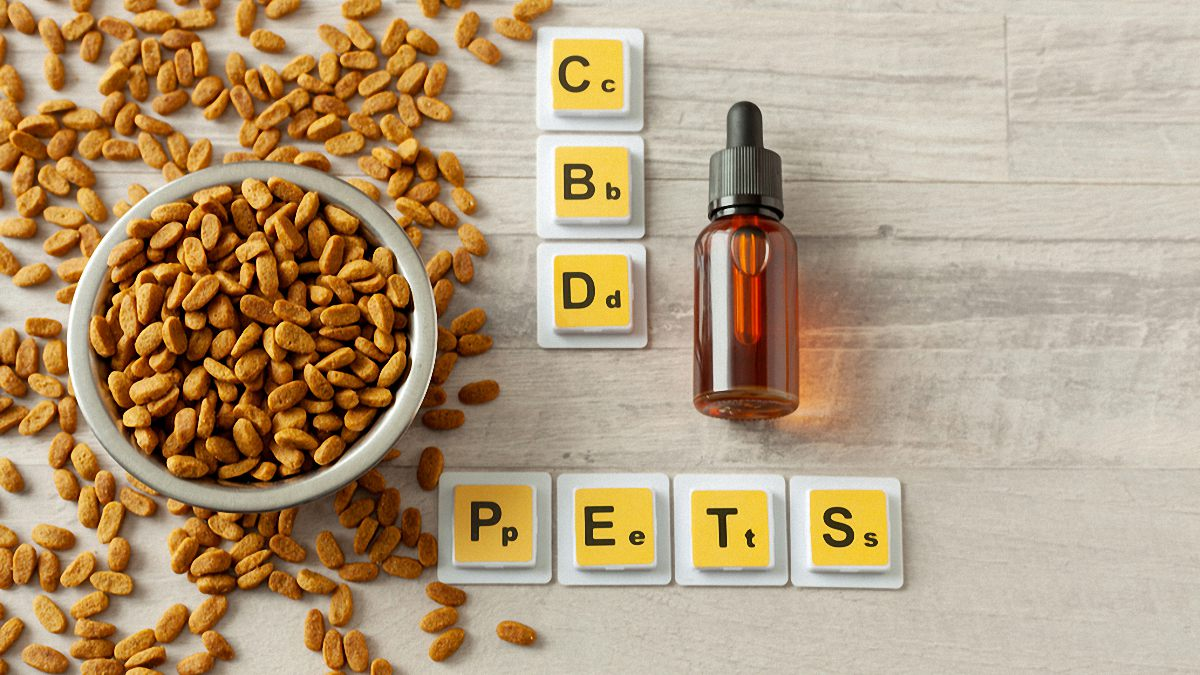 CBD Oil for Dogs with cancer surrounded by dog food and CBD Letters