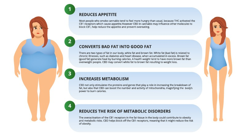 CBD benefits for Weight Loss