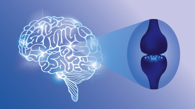 Illustration of Endocannabinoid System in Blue Background