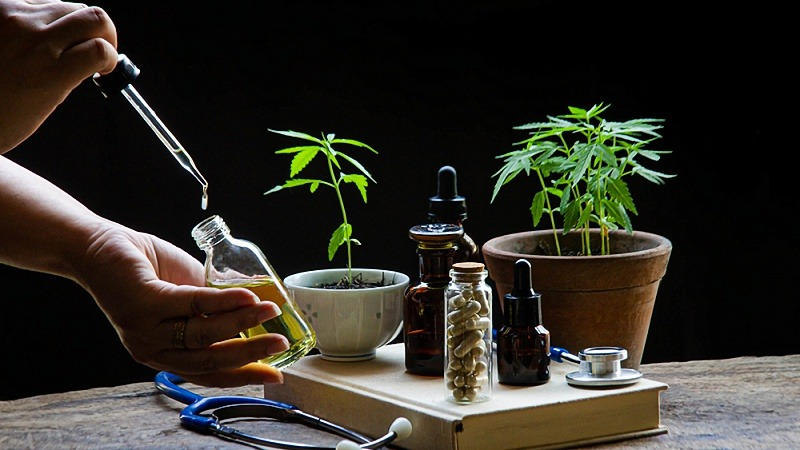 doctor taking CBD oil with capsules, tinctures and cannabis plants on the table