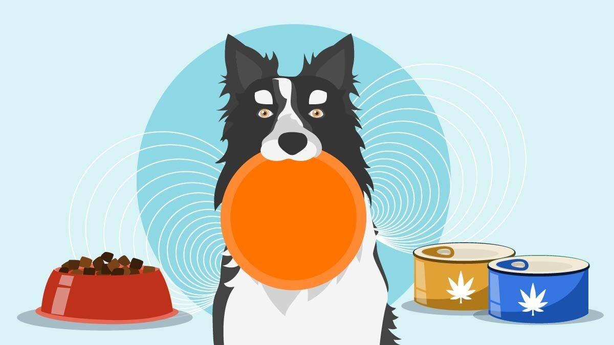 Illustration for Best CBD Dog Food Treats