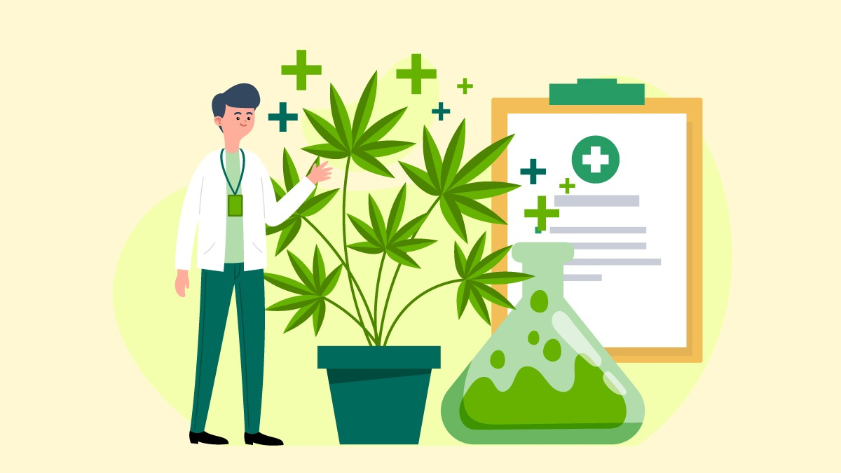 a scientist with marijuana plant and lab equipments
